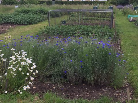 Make-over for Allotments at Shipton, Shipton Under Wychwood Parish Council